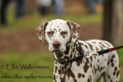 www-elke-wellermann-de02_0