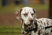 www-elke-wellermann-de03_0