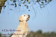 elke-wellermann-de13