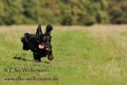 elke-wellermann-de29