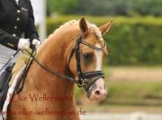www-elke-wellermann-de23