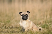 www-elke-wellermann-de01_1