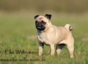 www-elke-wellermann-de02