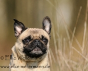 www-elke-wellermann-de03_0