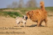 www-elke-wellermann-de05