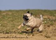 www-elke-wellermann-de08