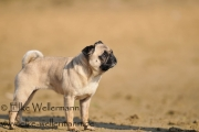 www-elke-wellermann-de09