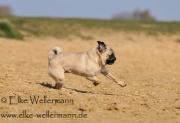 www-elke-wellermann-de10