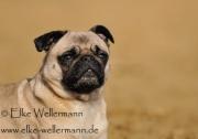 www-elke-wellermann-de12