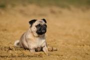 www-elke-wellermann-de14