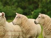 www-elke-wellermann-de09_0