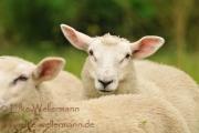 www-elke-wellermann-de16