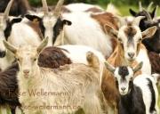 www-elke-wellermann-de01_5