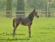 www-elke-wellermann-de02_9