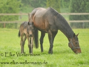 www-elke-wellermann-de04_3