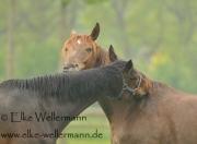 www-elke-wellermann-de05_6