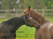 www-elke-wellermann-de06_7