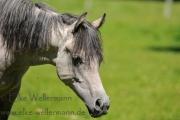 www-elke-wellermann-de12_3