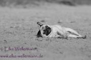 www-elke-wellermann-de11
